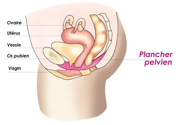 Lexappel doffres sur laugmentation penis