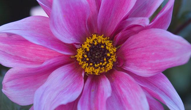 Fiore per donna speciale