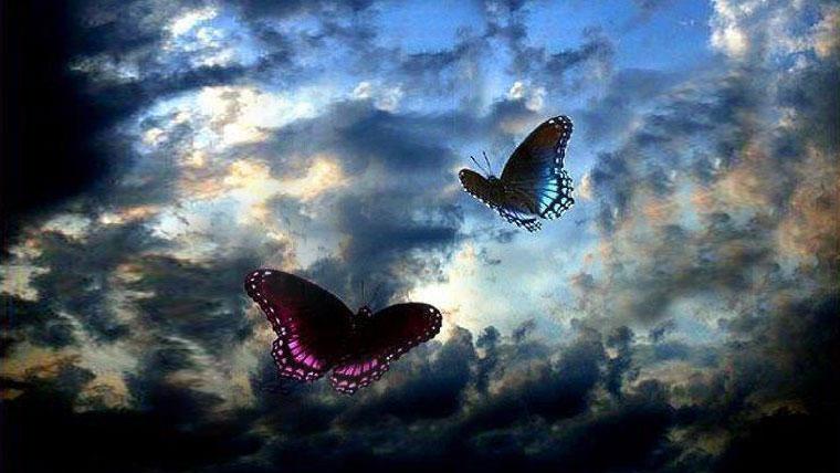 Farfalle che volano in un cielo nuvoloso