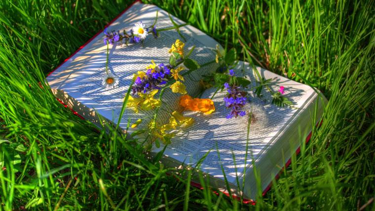 Libro dell'anima femminile, aperto su di un prato fiorito