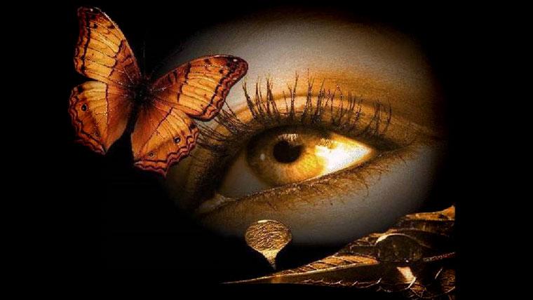 Occhio di ragazza, farfalla e gocce su una foglia