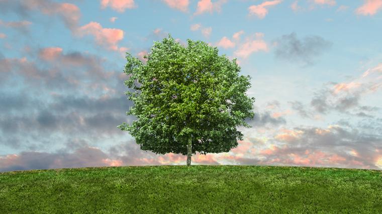 Il biotipo è come le radici di un albero sano